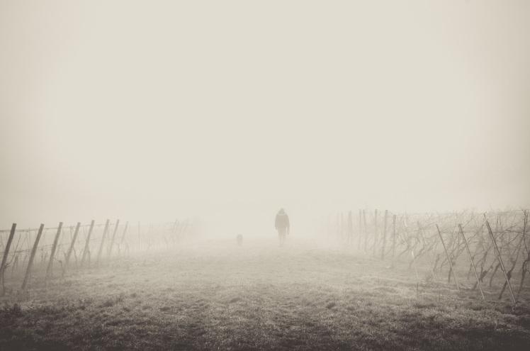 fog-1209205